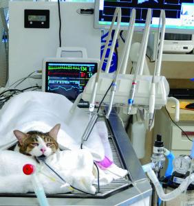 veterinary_bellows_a-c_2c_450