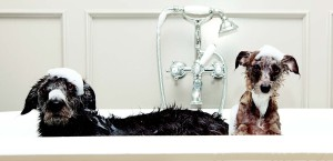 journal-dogs-image-dogs-bath