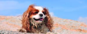dog-on-rock