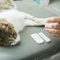 CPD: Living with FelV-infected Cats