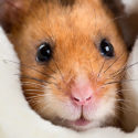 Enrichment for Small Mammals What Owners Need to Know