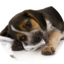 5 Imaging Gems  for Veterinarians:  How Digital Radiography Can Make Your Practice Sparkle