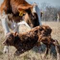 Pathogenesis, prevention and  treatment of postpartum uterine disease
